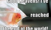 good heavens gold fish end of world bag funny pics pictures pic picture image photo images photos lol