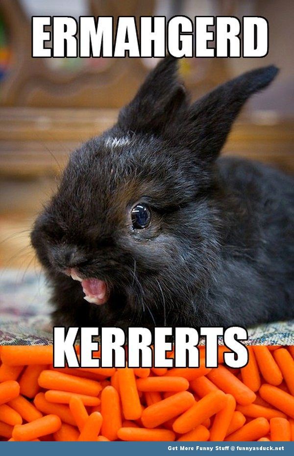 ermahgerd kerrerts rabbit animal funny pics pictures pic picture image photo images photos lol
