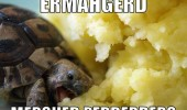 ermahgerd turtle mash potato animal funny pics pictures pic picture image photo images photos lol
