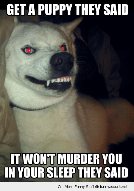 evil crazy dog animal kill funny pics pictures pic picture image photo images photos lol