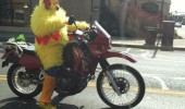 peter griffen family guy chicken suit motor cycle funny pics pictures pic picture image photo images photos lol