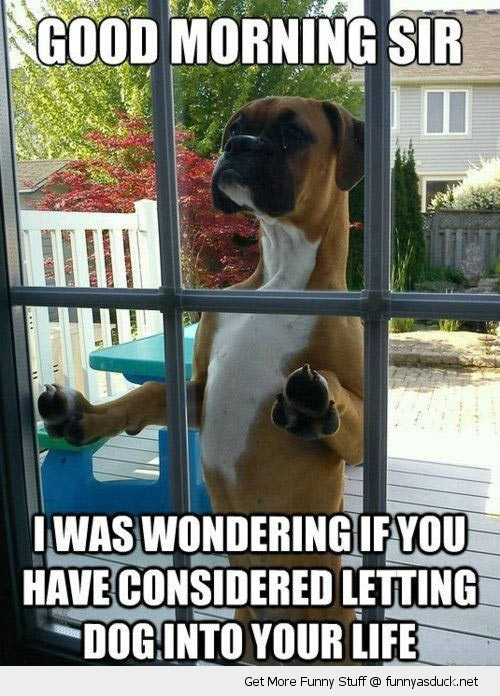 excuse me dog animal door garden funny pics pictures pic picture image photo images photos lol