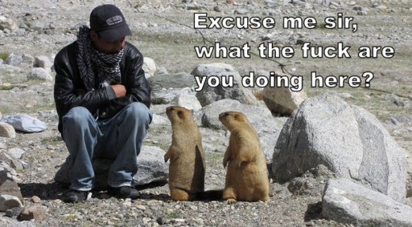 excuse me sir gophers animals funny pics pictures pic picture image photo images photos lol