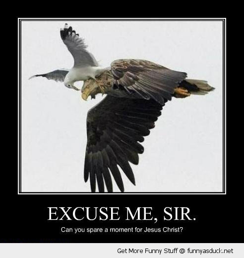 excuse me sir jesus christ seagull birds animals funny pics pictures pic picture image photo images photos lol