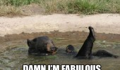 fabulous bear mud pit animal funny pics pictures pic picture image photo images photos lol