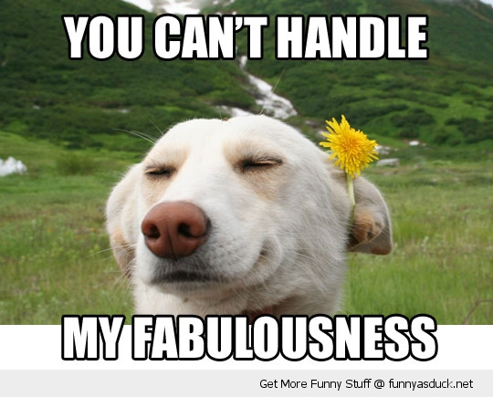 fabulous dog animal flower ear funny pics pictures pic picture image photo images photos lol