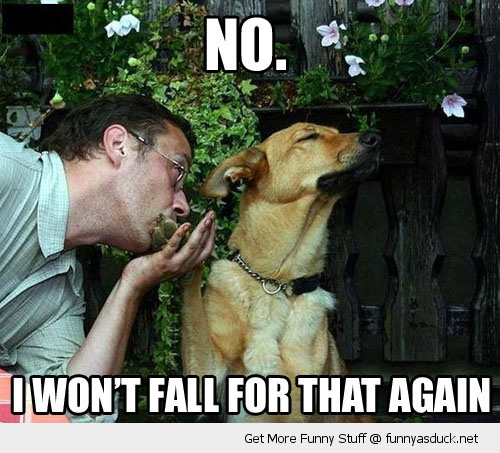 offended dog no fall for that animal kiss paw funny pics pictures pic picture image photo images photos lol