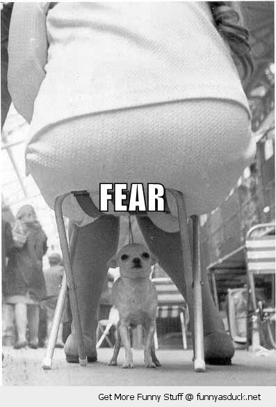 fat woman chair scared dog animal fear funny pics pictures pic picture image photo images photos lol