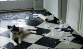 cat lolcat animal toilet paper ripped fighting funny pics pictures pic picture image photo images photos lol