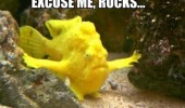 excuse me rocks fish aquarium funny pics pictures pic picture image photo images photos lol