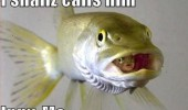 fish animal meme inny me funny pics pictures pic picture image photo images photos lol