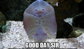 fish welcome aquarium ray ocean animal funny pics pictures pic picture image photo images photos lol