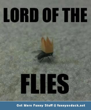 lord of the flies insect animal meme crown funny pics pictures pic picture image photo images photos lol