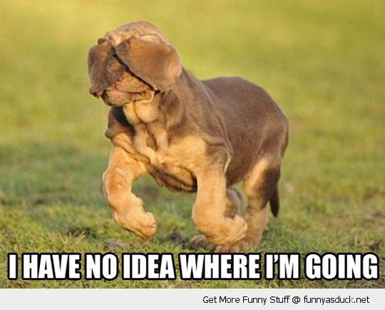 no idea going floppy ears dog animal blind funny pics pictures pic picture image photo images photos lol