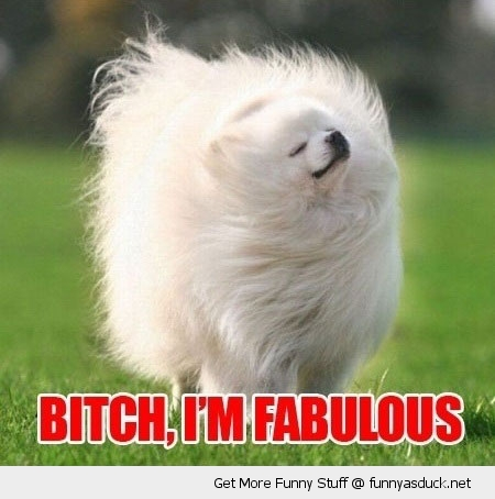fabulous dog fluffy cute animal shaking funny pics pictures pic picture image photo images photos lol