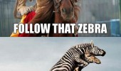 follow that zebra animals lion horse giraffe funny pics pictures pic picture image photo images photos lol