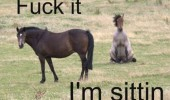 fuck it sitting horse animal funny pics pictures pic picture image photo images photos lol