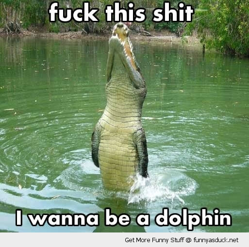 fuck this shit alligator crocodile dolphin animal funny pics pictures pic picture image photo images photos lol