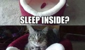 sleep inside fuck you cat lolcat animal funny pics pictures pic picture image photo images photos lol