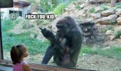 fuck you kid monkey gorilla zoo animal funny pics pictures pic picture image photo images photos lol