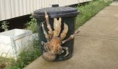 garbage can huge crab comic woman nope funny pics pictures pic picture image photo images photos lol