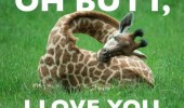 butt i love you giraffe animal funny pics pictures pic picture image photo images photos lol