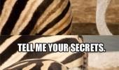 funny-glorious-zebra-butt-ostrich-pics