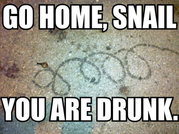 go home drunk snail animal insect funny pics pictures pic picture image photo images photos lol