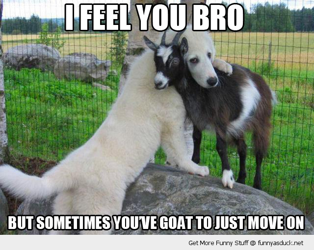 feel you bro goat dog animal funny pics pictures pic picture image photo images photos lol