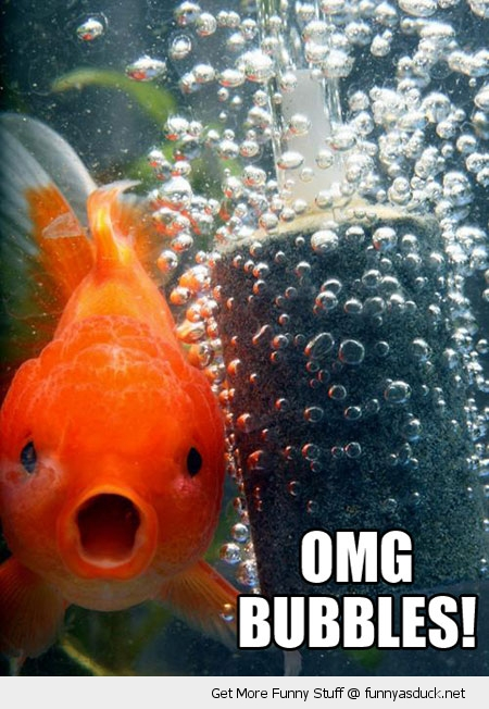 omg bubbles gold fish animal funny pics pictures pic picture image photo images photos lol