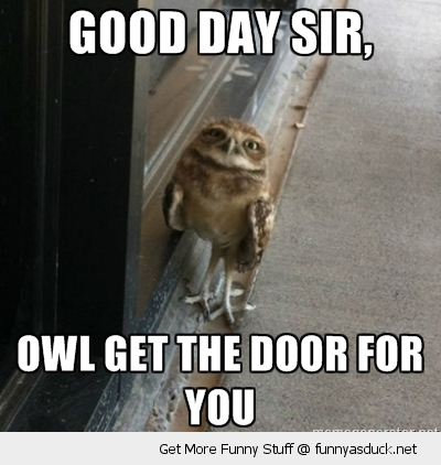 good day sir owl bird animal funny pics pictures pic picture image photo images photos lol