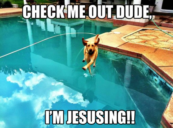 i'm jesusing dog walk on water pool animal funny pics pictures pic picture image photo images photos lol
