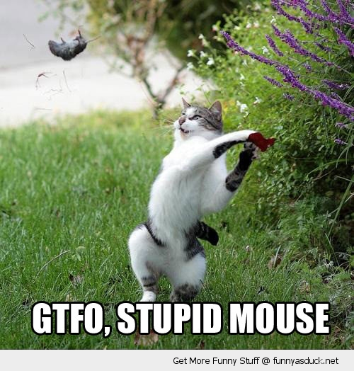 gtfo stupid mouse animal throw cat lolcat funny pics pictures pic picture image photo images photos lol