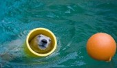 tube polar bear playing toy zoo animal funny pics pictures pic picture image photo images photos lol
