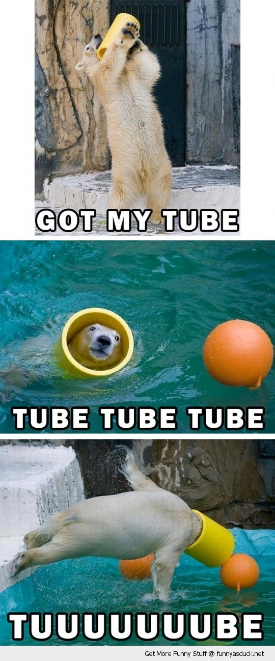 tube polar bear playing toy zoo animal funny pics pictures pic picture ...