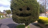happy tree welcome neighbourhood funny pics pictures pic picture image photo images photos lol