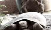dude sex turtle animal happy face funny pics pictures pic picture image photo images photos lol