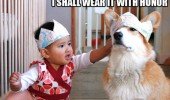 dog animal kid hat crown honor funny pics pictures pic picture image photo images photos lol