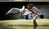 swan attacking ginger kids hate pond lake funny pics pictures pic picture image photo images photos lol
