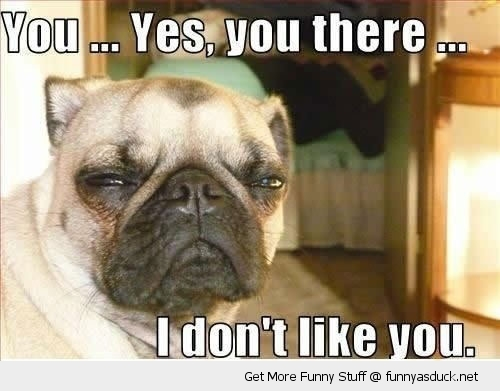 dont like you dog pug animal funny pics pictures pic picture image photo images photos lol