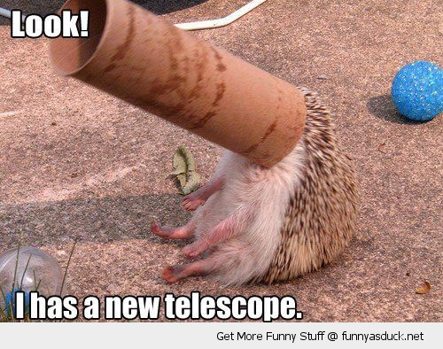 hedgehog toilet roll stuck head telescope animal funny pics pictures pic picture image photo images photos lol