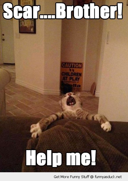 help me cat scar lion king disney animal funny pics pictures pic picture image photo images photos lol