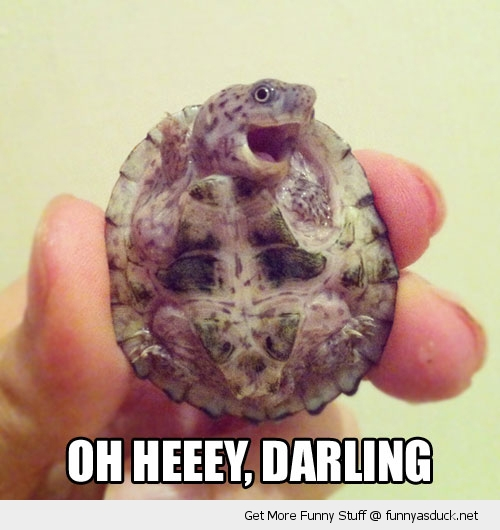 Funny turtle pictures with words - photo#7