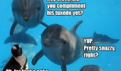cheeky dolphins penguin aquarium tuxedo animal funny pics pictures pic picture image photo images photos lol