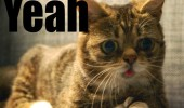 yeah kicking in high stoned cat lolcat animal funny pics pictures pic picture image photo images photos lol