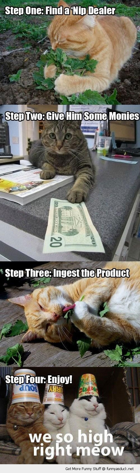 high stoned cats lolcats animals catnip funny pics pictures pic picture image photo images photos lol