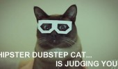 hipster cat watching you animal lolcat funny pics pictures pic picture image photo images photos lol