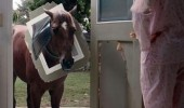 dammit henry horse cat flap broken door funny pics pictures pic picture image photo images photos lol