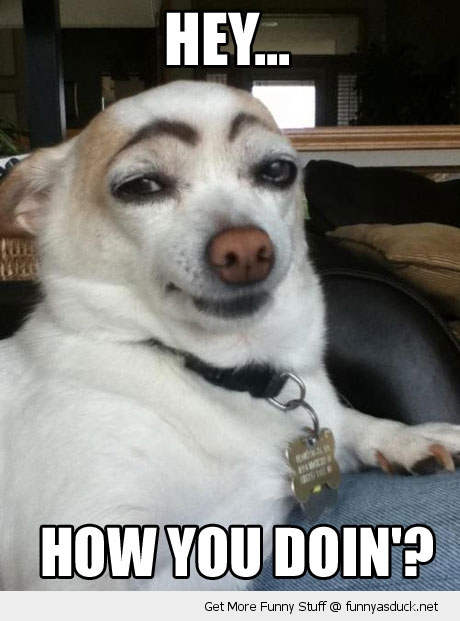 how you doing dog eyebrows animal funny pics pictures pic picture image photo images photos lol