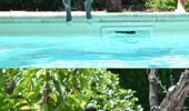 huge mistake dog swimming pool water animal funny pics pictures pic picture image photo images photos lol